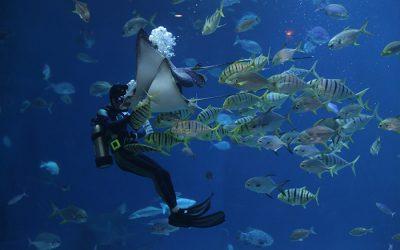 Sharm el-Sheikh back open for business